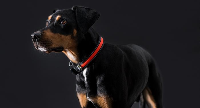 Das komplette hunter sortiment für hunde