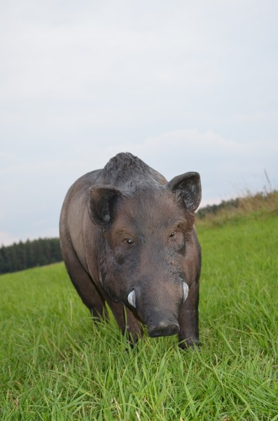 IBB 3D Target Enourmous Boar