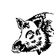 Wildschwein59df78273f7c5